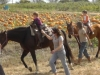 horses-and-pumpkins