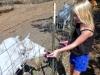 goat-feeding-1