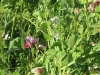 cover-crop-close-at-lewis