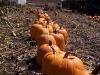 pumpkin-parade-lrg