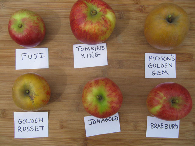 Apple Varieties by Sarah