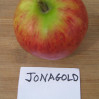 Apples-Jonagold