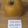 apples-Hudsons Golden Gem
