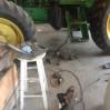 Tractor Cat