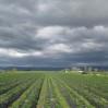 stormy skies2