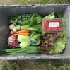crate packed with veggies comp