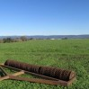 ring roller with cover crop