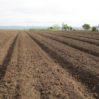 woodchipped field closer