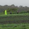 rainy harvest 4